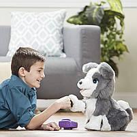 Интерактивный щенок Рикки Hasbro FurReal Friends Ricky Pet (E0384), фото 3