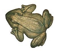 Лягушка декор для садовых дорожек и стен, фото 1