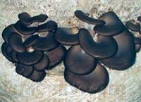 Мицелий Вешенки китайский чёрный, Pleurotus ostreatus 100г.