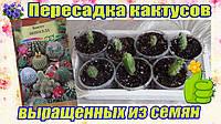 Кактусы смесь, семена