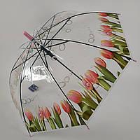 """Прозрачный зонт-трость с изображением тюльпанов, полуавтомат от фирмы """"Feeling rain"""" - 211-4"""