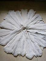 Шкуры мех шиншиллы окрас Белый