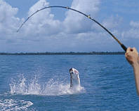 Риболовля 17, 18 і 19 квітня.
