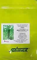 АВАНТЮРИСТ F1 (1000шт) - Огурец партенокарпический, Satimex