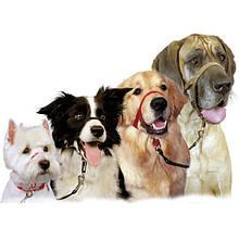 Амуниция и аксессуары для собак