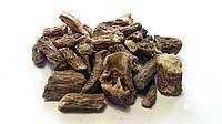 Цикорий корень дикий, фото 1