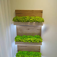 Панель из мха и растений