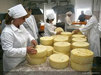 Закваска для Голландского сыра 1000 л