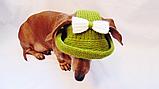 Летняя шапка для маленьких собак и котов,панамка для таксы, фото 3