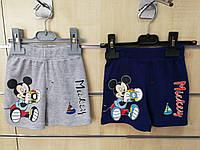 Шорты для мальчика оптом, Disney, 68-86 рр.,  № 91039