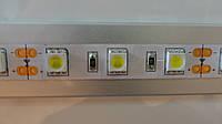 Светодиодная лента без силикона SMD 50x50 30 шт./1 м. белый холодный