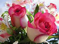 Розы саженцы в контейнерах