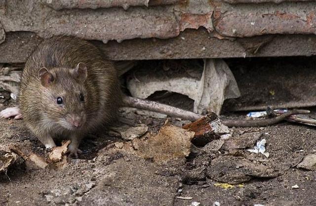 Отпугиватель грызунов, отпугиватель крыс, отпугиватель мышей.