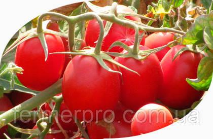 Семена томата Калиендо F1 25 000 сем. Esasem