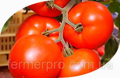 Семена томата Нада F1 1000 сем. Esasem
