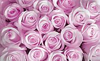 Фотообои бумажные на стену 368х254 см 4 листа: Розовые бутоны
