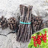Черенки красной смородины Джонкер ван Тетс, фото 1