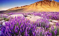 Весна в пустынях 🐫