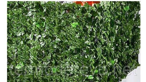 Декоративная зеленая изгородь «Молодой вьюнок»