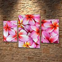 Плюмерия, Модульные триптих картины, на ПВХ ткани, 45х70 см, (30x20-2/45x25), фото 1