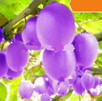 Семена фиолетового киви 5 семян упаковка