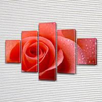 Алая Роза, модульная картина (Цветы), на ПВХ ткани, 65x100 см, (25x18-2/45х18-2/80x18), фото 1