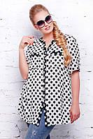 Блуза с планкой черно-белая в горошек АРИЯ, фото 1