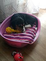 Лежак фирмы Ferplast и игрушки Trixie