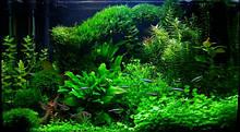 Борьба с водорослями