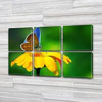 Голубая бабочка на желтом Цветке, модульная картина (Цветы), на Холсте син., 52x80 см, (25x25-6), фото 1