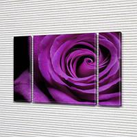 Фиолетовая Роза, модульная картина (Цветы) на Холсте син., 75x100 см, (75x18-2/75х60)