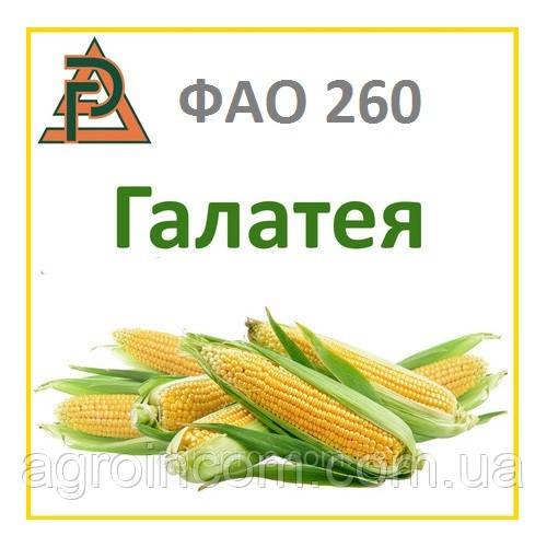 Семена кукурузы ДН Галатея (РостАгро). ФАО 260