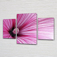 Розовый гибискус, модульная картина (Цветы), 80х120 см, (55x35-2/80x45), фото 1