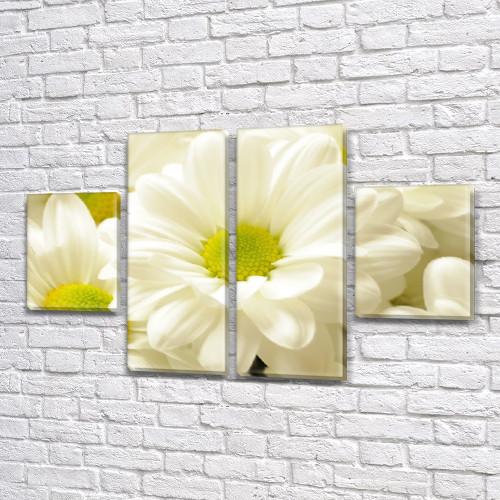 Белые хризантемы, модульная картина (Цветы) на Холсте, 80x130 см, (40x30-2/80х30-2)