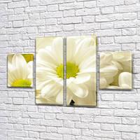 Белые хризантемы, модульная картина (Цветы) на Холсте, 80x130 см, (40x30-2/80х30-2), фото 1