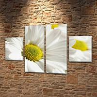 Белые хризантемы, модульная картина (Цветы) Ромашки (Цветы), 80x130 см, (40x30-2/80х30-2)