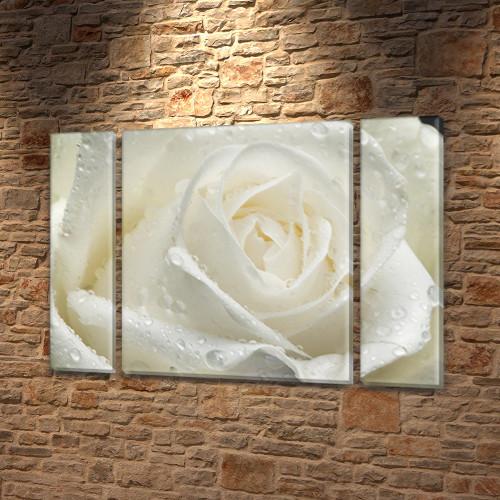 Белая Роза и Роса, модульная картина (Цветы) на Холсте, 95x135 см, (95x24-2/95х80)