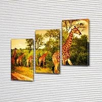 Жирафы в Саванне, модульная картина (животные, Африка), на ПВХ ткани, 70x80 см, (50x25-2/50х25)