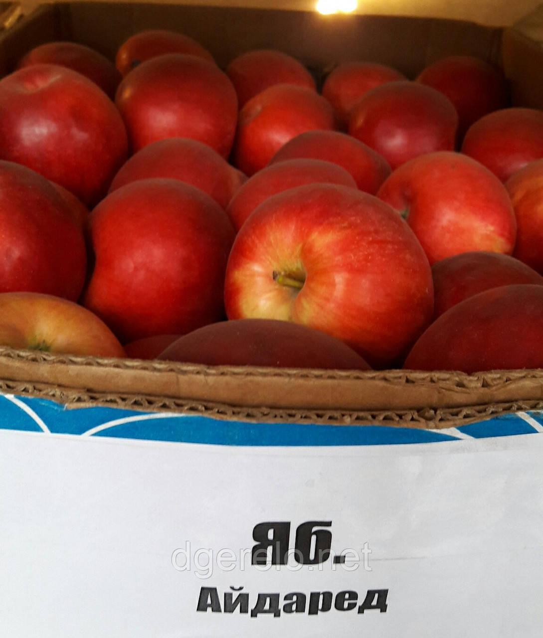 Саженцы яблони  Айдаред (зимний)