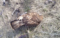 Масову загибель птахів і тварин виявили в Запорізькій області