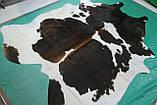 Красива шкіра буйвола темно-коричневого кольору з білими боками, фото 2