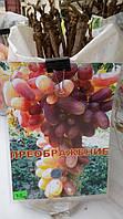 Саженец винограда сорт Преображение
