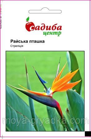 Стреліція Райська пташка, 3 шт СЦ