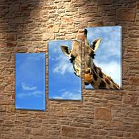 Жираф и облака, модульная картина (животные, жирафы) на Холсте, 100х110 см, (70x35-3), фото 1