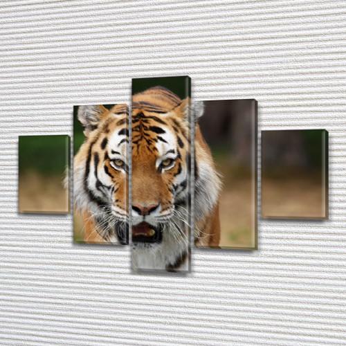 Тигр, модульная картина (животные, коты) на Холсте, 95x135 см, (40x25-2/70х25-2/95x25)