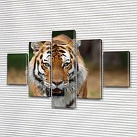 Тигр, модульная картина (животные, коты) на Холсте, 95x135 см, (40x25-2/70х25-2/95x25), фото 1