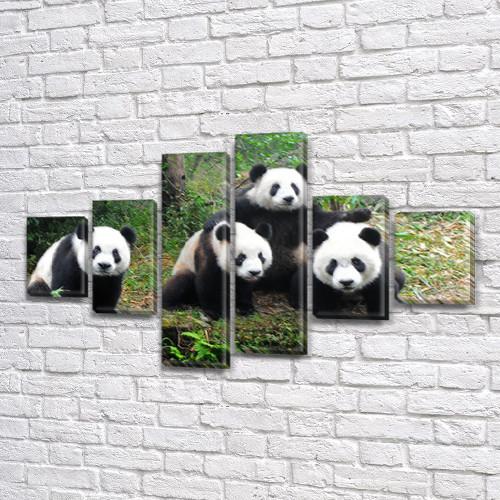 Панды, модульная картина (животные, медведи) на ПВХ ткани, 80x135 см, (30x20-2/40х20-2/75x20-2)