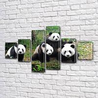 Панды, модульная картина (животные, медведи) на ПВХ ткани, 80x135 см, (30x20-2/40х20-2/75x20-2), фото 1
