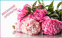 Майская роза: ароматы на весну