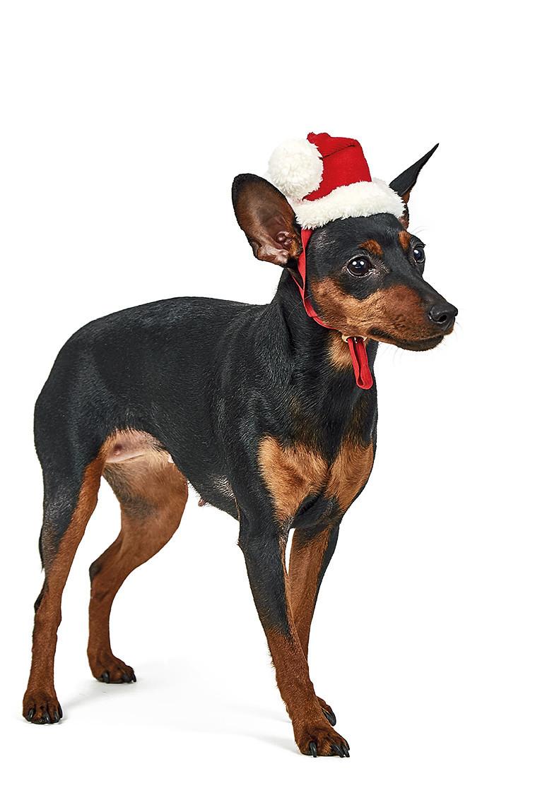 Колпак Pet Fashion новогодний, S